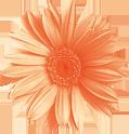 Hi-s-flower
